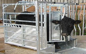 cattle-product-img-20222